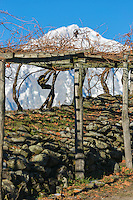 Italie, Val d'Aoste, Morgex:   Vignes  en pergola d' Ermes Pavese , dans le  hameau de Villaret avec en fond le Mont Blanc // Italy, Aosta Valley, Morgex: Ermes Pavese vineyards, village of Villaret with Mont Blanc in the background