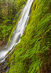 Olympic National Park, Washington<br /> Madison Creek Falls spreads on a mossy wall in the Elwha river valley