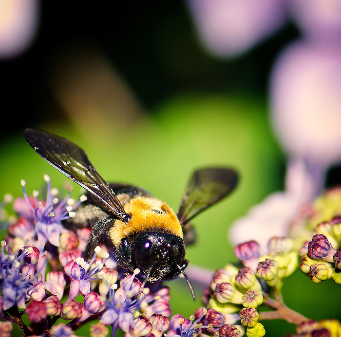 Nature, Bugs, Insects and Bees in Babylon, Long Island