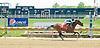 Graysonia winning at Delaware Park on 5/12/12