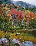Acadia National Park, ME<br /> Fall colored trees along the shoreline of Bubble Pond lined with granite boulders and pond grasses