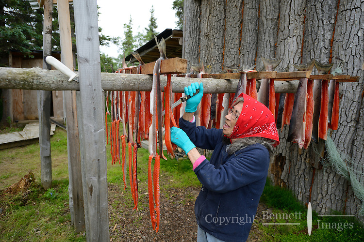 Dena'ina Athabascan elder Agnes Alexie cuts dried red (sockeye) salmon (Oncorhynchus nerka) into strips at a fish camp on Six Mile Lake near Nondalton, Alaska, adjacent to Lake Clark National Park and Preserve, where the traditional subsistence ways of catching and preserving salmon as they return from the sea in mid July are still practiced today.  NOT FOR USE BY THE MINING INDUSTRY. MR