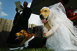 Patrick Koch <cq>, left, dressed as a minister and with New Horizons Service Dogs, Inc., marries Patriot <cq>, the groom, and Carley <cq>, the bride, both one-year-old golden retriever service dogs in-training, Saturday, October 30, 2004, at the DeLand Animal Hospital's open house in DeLand. (Chad Pilster).**STAND ALONE FEECH**