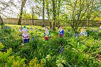 France, Indre-et-Loire, Lémeré, jardins et château du Rivau au printemps (avril), la Forêt enchantée, jacinthes des bois (Hyacinthoides non-scripta) et nains de jardin politiques