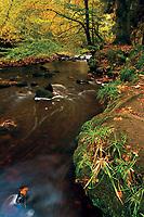 The Rotten Calder in autumn, Calderglen Country Park, East Kilbride, South Lanarkshire