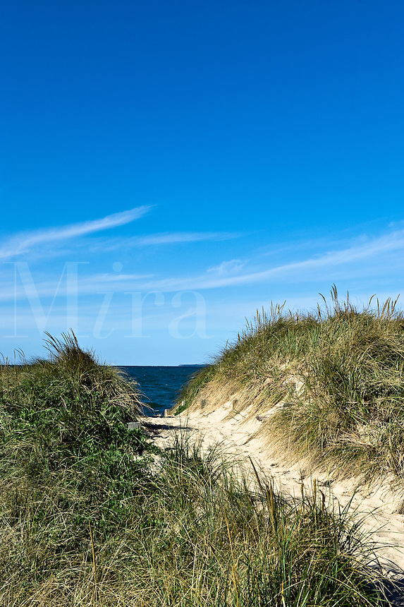Dune path leading to the beach, Cape Cod Bay, Crosby Beach