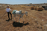 Chemi, a settler, handles his donkey in the unauthorized Israeli outpost of Bnei Adam, West Bank.