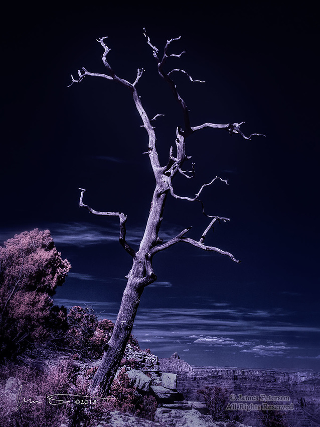 Piñon Picket, South Rim of Grand Canyon (Infrared) ©2018 James D Peterson.  The skeleton of a gnarly pine stands watch over one of the world's most spectacular chasms.