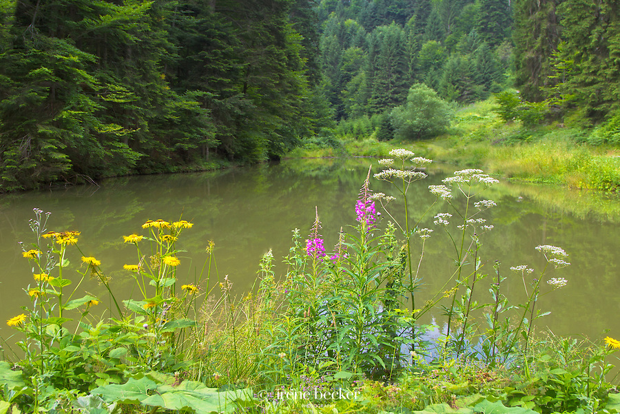 Pond Jarevac, Tara National Park, West Serbia.