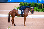 Piggy French. Quarrycrest Echo. GBR. Eventing Dressage. Day 3. World Equestrian Games. WEG 2018 Tryon. North Carolina. USA. 13/09/2018. ~ MANDATORY Credit Elli Birch/Sportinpictures - NO UNAUTHORISED USE - 07837 394578