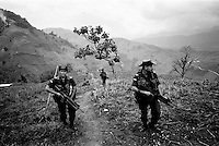 colombia1034 - anti-narcotics police fumigate a poppy field in the formerly controlled by FARC region..Meta, march 2002.<br />