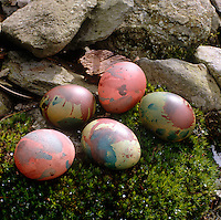 Five hand-painted eggs on a bed of moss