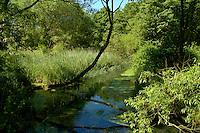Chalk Stream, Southern England