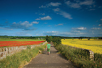 Poppy Field and Oil Seed Field at Inveresk near Musselburgh, East Lothian
