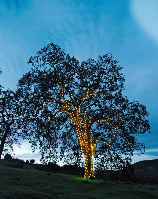 Holiday tree in Yountville