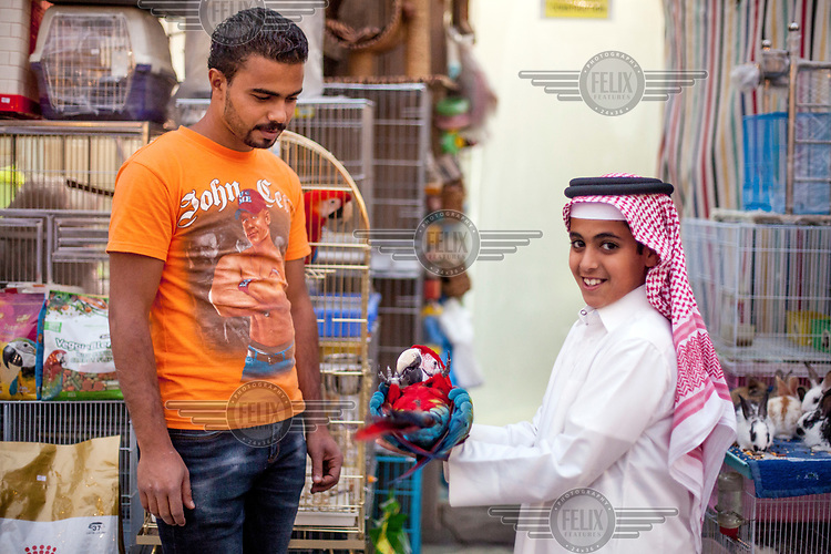 A young boy holding a parrot at the Souq Waqif animal market.