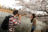 Taking photos under the cherry blossom, Ueno Park, Tokyo, Japan, April 3, 2010.