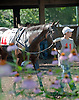 Sakonnet Point in the paddock before her first start at Delaware Park on 7/6/13