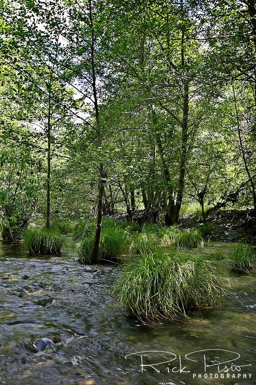 Alameda Creek flows through the Sunol Regional Wilderness near Sunol, California. Sunol Regional Park is part of the East Bay Regional Park District.