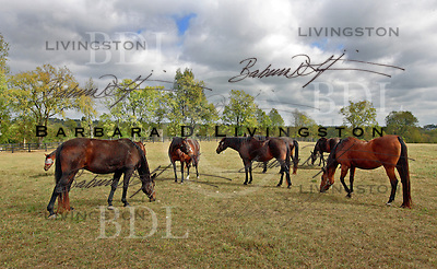 Includes Napa Valley (blaze, center left), a sister of champion Standardbred Silk Stockings.  2007 scenic, mood, horse racing, pretty, racehorse, horse, equine, racetrack, track, saratoga