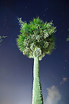 Palmetto Palm Tree at night in Charleston South Carolina