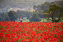 2019_06_23_Chatsworth_Poppies_Kite
