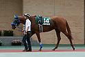 Horse Racing :  CBC Sho 2016