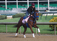 May 1, 2014: Sugar Shock gallops in preparation for the Kentucky Oaks at Churchill Downs in Louisville, KY. Zoe Metz/ESW/CSM