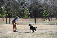 "NWA Democrat-Gazette/J.T. WAMPLER Tim Wardlow of Springdale plays fetch with his dog Zeus Monday Jan. 7, 2019 at the dog park at C.L. ""Charlie"" & Willie George Park in Springdale. The dog park is part of a a 75-acre park located at the southeast intersection of Don Tyson Parkway and Hylton Road."