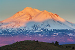 Sunset light on the snow-capped Mount Shasta, Siskiyou County, California
