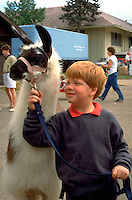 Boy holding llama with harness at State Fair age 8.  St Paul  Minnesota USA