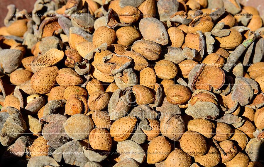 SPAIN Mallorca, Binissalem, Finca Biniagual, almond trees, almond harvest,  almond trashing machine / SPANIEN Mallorca, Binissalem, Finca Biniagual, Mandelbaeume, Mandelernte, Maschine zur Reinigung der Mandeln