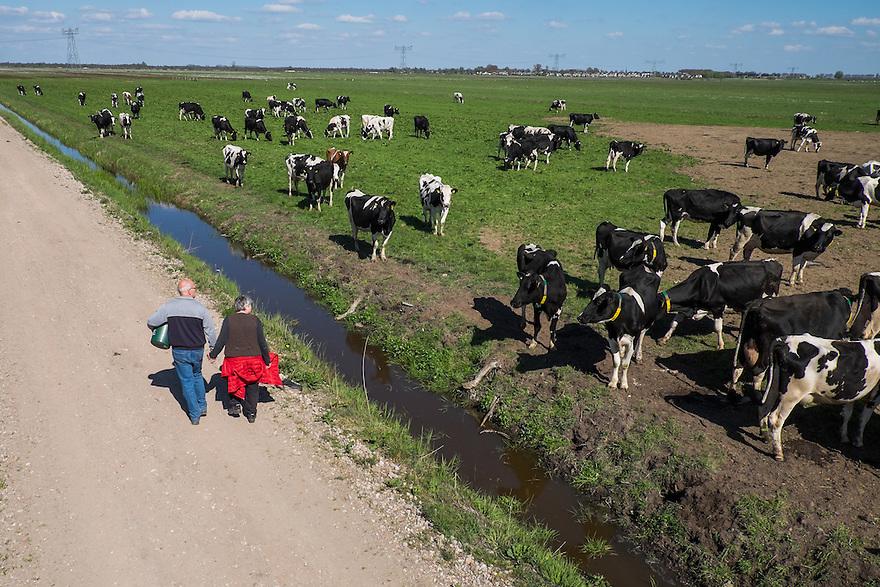 Nederland, Zwartsluis, 2 mei 2015<br /> Natuurboerderij Weidevol. Biologisch melkveebedrijf. <br /> Wandelaars lopen over een boerenweggetje langs een weiland vol met koeien.<br /> <br /> Foto: Michiel Wijnbergh