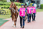 Time Warp (#3) being led to the paddock during the Sa Sa Ladies' Purse (G3 1800m) during Hong Kong Racing at Sha Tin Racecourse on November 04, 2018 in Hong Kong, Hong Kong. Photo by Yu Chun Christopher Wong / Power Sport Images