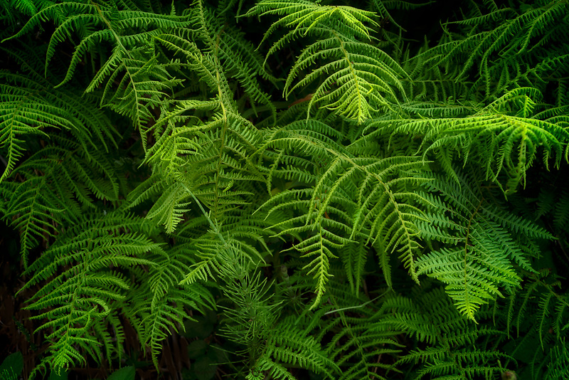 Close up of fern. Cornwall, England
