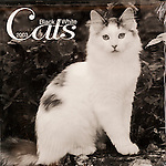 Published photography by Larry Angier..Black and White Cats 2003 cover..Browntrout Publishers