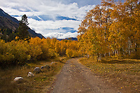 Sky with clouds, rocks and road - mere bit players to the true star - autumn's color.