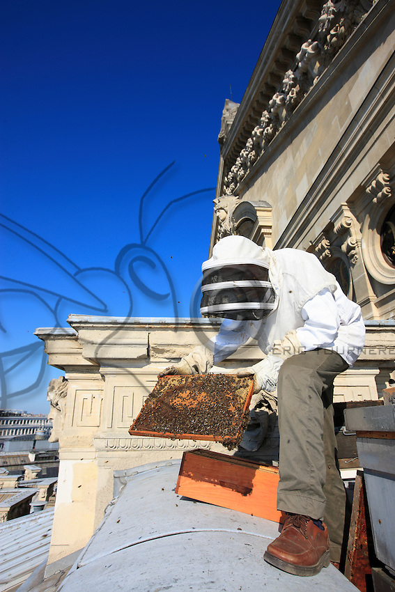 """Paris, Opera Garnier. Jean Paucton, 76 years old, on the roof of the opera opening up a hive and inspecting a frame. """"In urban apiculture, raising bees is easier because, firstly, the temperature is milder in Paris, by about 3°C, which allows them to go out more. Secondly, the flora is very diversified: linden, chestnut trees..."""""""