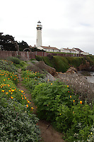 A footpath lined with orange blooming California poppies along the cliff at Pigeon Point Lighthouse on the California coast.