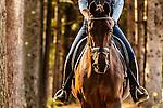 20121002 Kym Horses