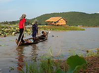 Workers on a boat on the lake. Lotus flower fields lake and farm north west of Battambang