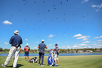 Eddie Pepperell (ENG) looks at all the birdies circling over the green on 6 during round 1 of the Arnold Palmer Invitational at Bay Hill Golf Club, Bay Hill, Florida. 3/7/2019.<br /> Picture: Golffile | Ken Murray<br /> <br /> <br /> All photo usage must carry mandatory copyright credit (© Golffile | Ken Murray)