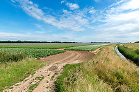 Entrance to a potato field - Lincolnshire, July