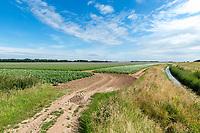 Entrance to a potato field - Lincolnshire, July