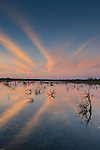 Clouds pick up the early dawn light and is reflected in the shallow waters & young mangroves of the Florida Keys
