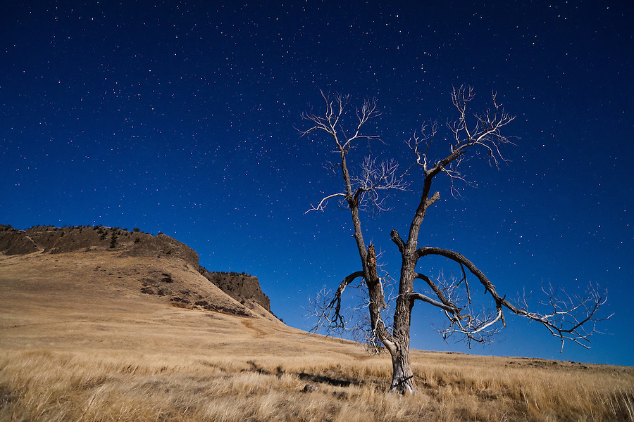This lone tree stands watch over Cascade County's Crown Butte in Central Montana on a clear night with a blue sky filled with stars.