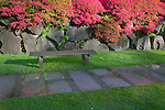 Seattle, WA<br /> Bench and stone path with Evergreen azaleas blooming on a rock wall, Japanese garden in the Washington Park Arboretum