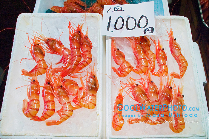 fresh shrimps for sale at wholesale shop, Tsukiji Fish Market or Tokyo Metropolitan Central Wholesale Market, the world's largest fish market, hadling over 2,500 tons and over 400 different kind of fresh sea food per day