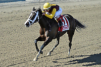 Broadway's Alibi (no. 1), ridden by Javier Castellano and trained by Todd Pletcher, wins the  63rd running of the grade 3 Comely Stakes for three year old fillies on April 07, 2012 at Aqueduct Race Track in Ozone Park, New York.  (Bob Mayberger/Eclipse Sportswire)