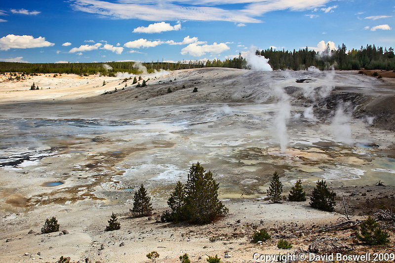 Thermal Features dot the landscape of Norris Geyser Basin in Yellowstone National Park.